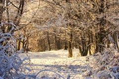 Morgenleuchte auf einer Winterszene im Wald Lizenzfreie Stockfotografie