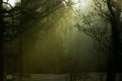 Morgenleuchte im Park Lizenzfreies Stockbild