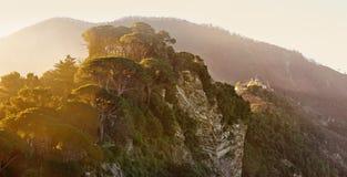 Morgenlicht durch die Zedern auf Berg San Rocco in Camogli Stockbilder