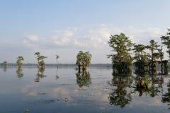 Morgenlicht im Bayou Lizenzfreie Stockfotografie