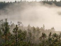 Morgennebel über dem Sumpf Stockbild