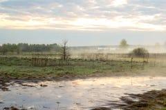 Morgennebel auf einer Wiese Stockfotos