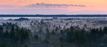 Morgennebel in einem Sumpf Lizenzfreies Stockbild