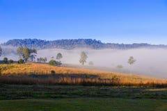 Morgennebel im Berg Stockfotos