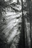 Morgennebel im Wald. Stockfotos