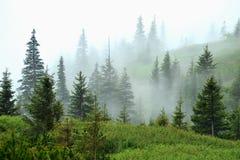 Morgennebel im Wald Lizenzfreie Stockfotografie