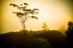 Morgennebel mit Baum Lizenzfreie Stockfotografie