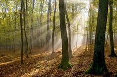 Morgennebel und das sun& x27; s strahlt im Wald aus Lizenzfreie Stockfotos