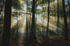 Morgennebel und das sun& x27; s strahlt im Wald aus Stockfoto
