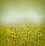 Morgennebel und -tau auf Gras und Blumen Lizenzfreies Stockfoto