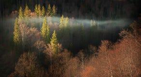 Nebeliger Herbstmorgen Lizenzfreies Stockbild
