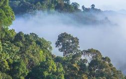 Morgens ist das kühle Wetter machen sich hin- und herbewegenden Nebel auf dem Berg als Meer des Nebels Stockfotos