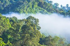 Morgens ist das kühle Wetter machen sich hin- und herbewegenden Nebel auf dem Berg als Meer des Nebels Lizenzfreies Stockfoto