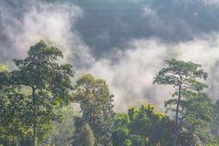 Morgens ist das kühle Wetter machen sich hin- und herbewegenden Nebel auf dem Berg als Meer des Nebels Stockbild