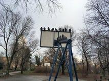 Morgensitzung von Tauben im Winter Stockfoto