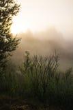 Morgenskizzen der Sommerlandschaft Stockbild