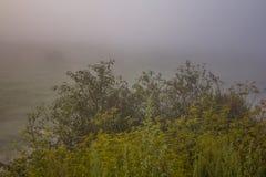 Morgenskizzen der Sommerlandschaft Stockfotos