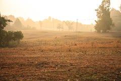 Morgensonne Stockfotografie