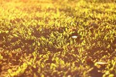 Morgensonne auf dem Rasen Stockfotografie