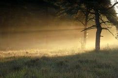 Morgensonnenlicht in der Waldwiese lizenzfreies stockbild