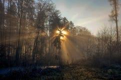 Morgensonnenschein Lizenzfreies Stockfoto