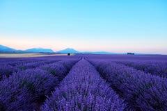Morgensonnenstrahlen über blühendem Lavendelfeld stockfotos
