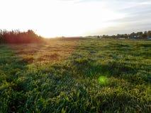 Morgensonnenstrahlen Stockbild