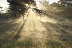 Morgensonnenstrahlen durch Bäume im Nebel lizenzfreies stockfoto