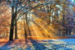 Morgensonnenstrahlen im Winterwald Lizenzfreie Stockfotos