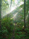 Morgenspaziergang im Wald Lizenzfreies Stockfoto