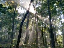 Morgenspaziergang im Wald Stockfoto