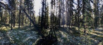 Morgenspaziergang im Wald stockbild