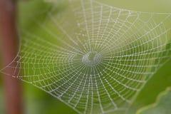Morgenspinnennetz Stockbilder