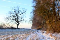 Morgenstimmung am alten Baum mit Schnee Lizenzfreie Stockbilder