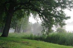 Morgenstimmung mit Nebel Stockfoto