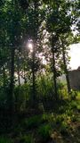 Morgenstrahl Stockbild