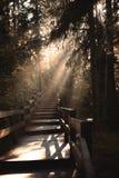 Morgenstrahlen des Lichtes durch den Nebel lizenzfreie stockbilder