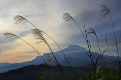 Morgenszene der Montierung Kinabalu in Sabah Stockbilder