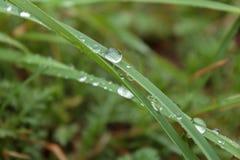 Morgentau auf dem grünen Gras in den Karpatenbergen Lizenzfreies Stockfoto