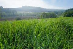 Morgentau auf dem Gras Stockfoto