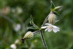 Morgentau auf einer Blume Stockfotos