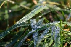 Morgentau auf Gras lizenzfreie stockbilder