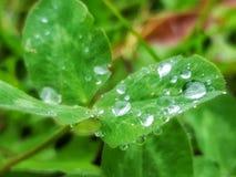 Morgentau im regnerischen Wetter Stockfotos