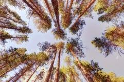Morgenwald an einem sonnigen Sommertag Stockfotografie