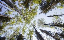 Morgenwald gesehen von darunterliegend Stockbild