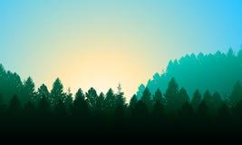 Morgenwaldhintergrund mit Kiefern, Himmel und Sonne Stockfotografie
