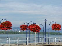 Morges, Szwajcaria Wazy czerwoni kwiaty w mieście na jeziora Ge zdjęcie royalty free