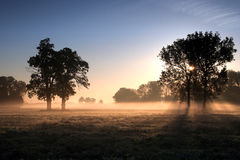 morgon Royaltyfri Bild