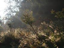 Morgon Royaltyfri Fotografi