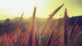 Morgon Royaltyfria Bilder